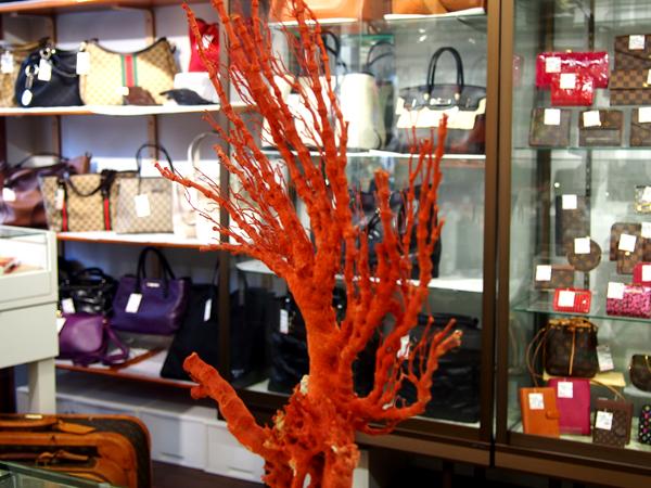 珊瑚 サンゴ 原木 置物